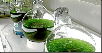 microalgas para biodiesel